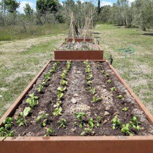 Corsi di cucina in agriturismo orto biologico